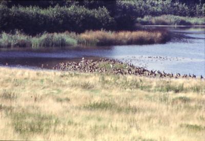 reservebecken
