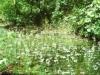 Wasserfeder