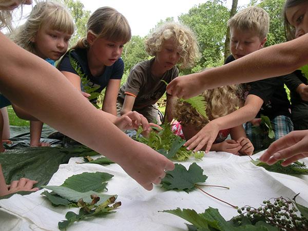 Kinder beugen sich über ein Tuch mit unterschiedlichen Blättern