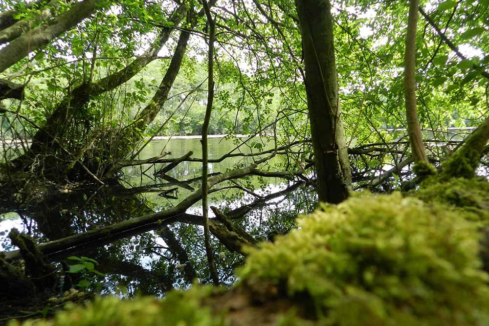 Moos und abgestorbene Bäume am Wasser