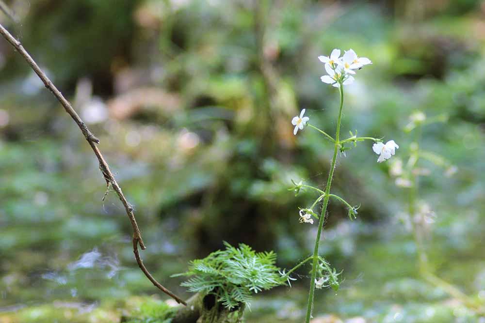 Blume im Vallenmoor