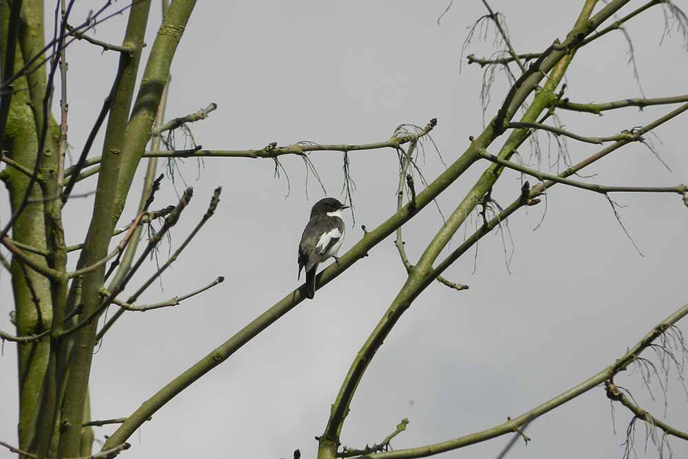 Vogel auf Baum